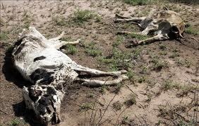 Sequía en el Campo