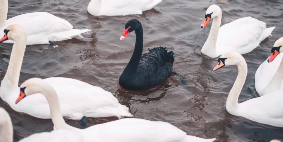 Cisne Negro, COVID, Teoría, Pandemia